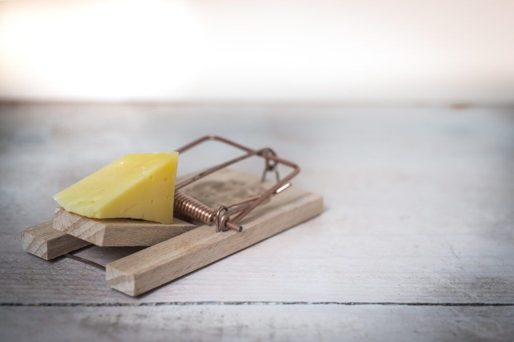 mouse trap, cheese, device